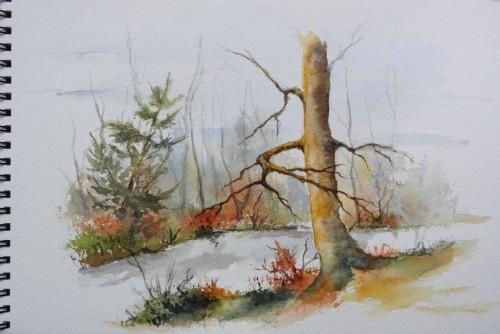 aquarelle,paysage,abby,arbres,sous-bois,forêt,automne,hiver,rivière,tronc,sapin