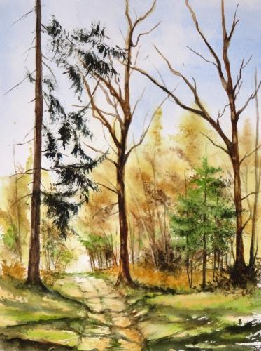 aquarelle,abb,arbres,forêt,paysage,campagne,sous-bois,chemin,sapins,arbres,hêtres