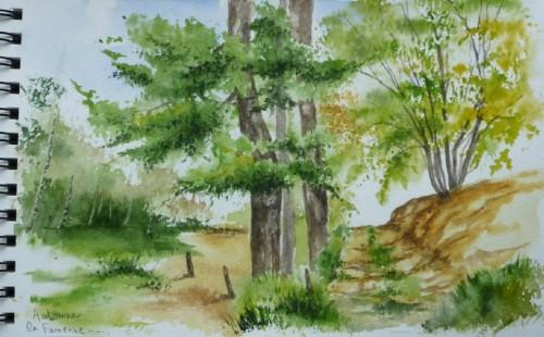 arbres,forêt,chemin,campagne,ardennes