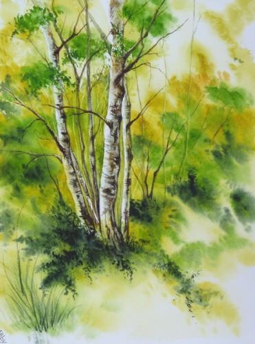 aquarelle,paysage,abby,campagne,bouleaux,arbres,rochers