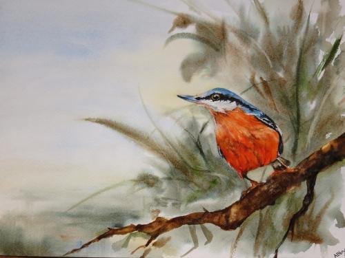 aquarelle,abby,oiseau,sitelle,lac,rivière,eau,étang,branche,arbre