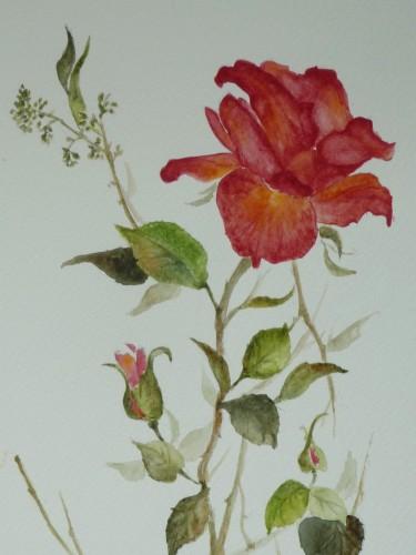 rosedesdolodétails.JPG