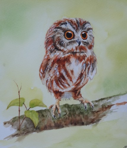 aquarelle,abby,chouette,hibou,animal