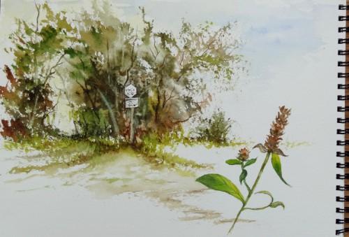 aquarelle,sous-bois,forêt,abres,abby,campagne,croquis
