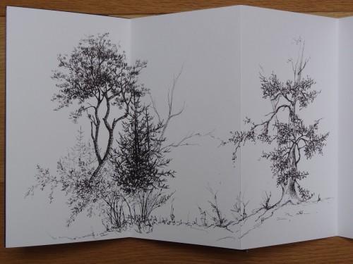 dessin feutre,arbres,abby,croquis