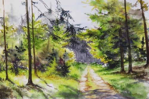 aquarelle,abby,arbres,forêt,paysage,campagne,sous-bois,bouleaux,sapins