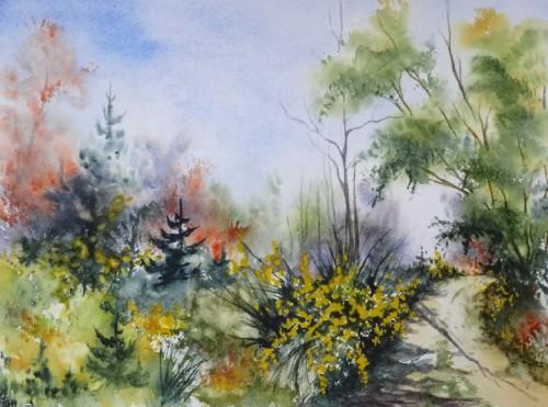 aquarelle,abby,arbres,forêt,paysage,campagne,sous-bois,sapins,genêts,chemin,printemps