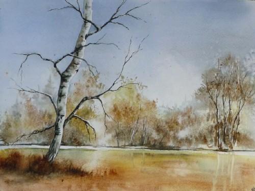 aquarelle,arbres,bouleau,paysage,forêt
