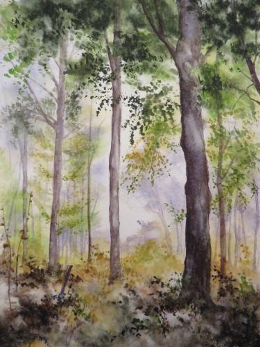 aquarelle,abb,arbres,forêt,paysage,campagne,sous-bois,brume,brouillard,aube
