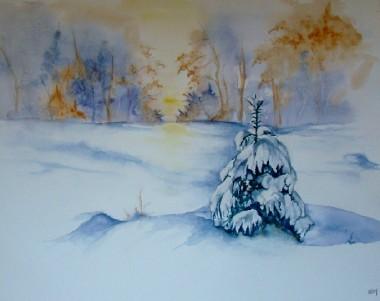 Sapin blanc 1.jpg